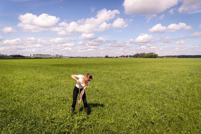 Jacqueline Ulen bestrijdt de droogte. Ze heeft een subirrigatiesysteem aangelegd in de grond, waardoor ze effectiever droogte kan aanpakken.