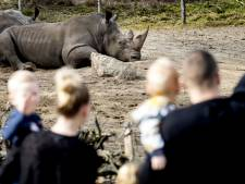Safaripark Beekse Bergen wil open: 'Laat ons helpen'
