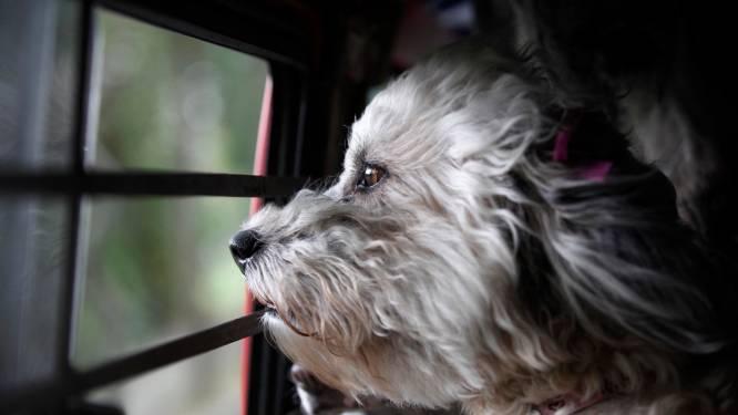 """Honden vaak fout geregistreerd: """"Controle kan later veel dierenleed besparen"""""""