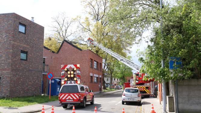 Zware tak van boom breekt af door rukwinden en komt op dak terecht