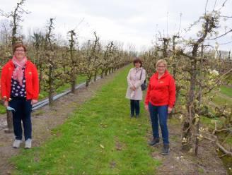 """""""Wandelen tussen Eksaardse fruitbloesems"""": Fruitsappen Verhofstede en stad lanceren bloesemwandelingen"""