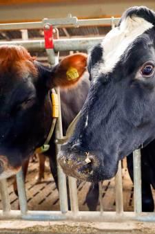 Onrust bij boeren over uitspraak milieuvriendelijke stallen: 'Ik zie gewoon niet dat wij iets fout doen'