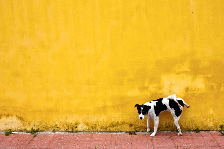 hond Beeld Getty Images/500px