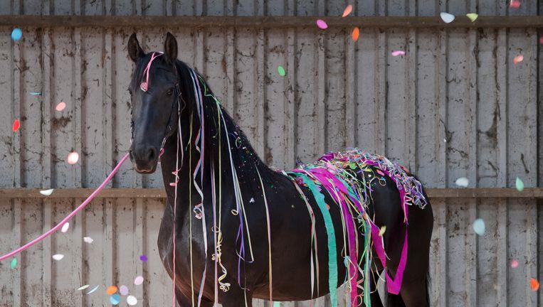 Fries paard gefotografeerd door Heleen Haijtema en Tryntsje Nauta Beeld