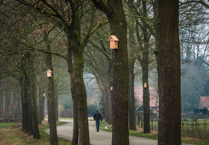 In 2019  begon Haaksbergen met een proef met nestkastjes aan eiken, zoals hier aan de Huttenweg.