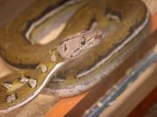 Un python de plusieurs mètres de long saisi à Grâce-Hollogne