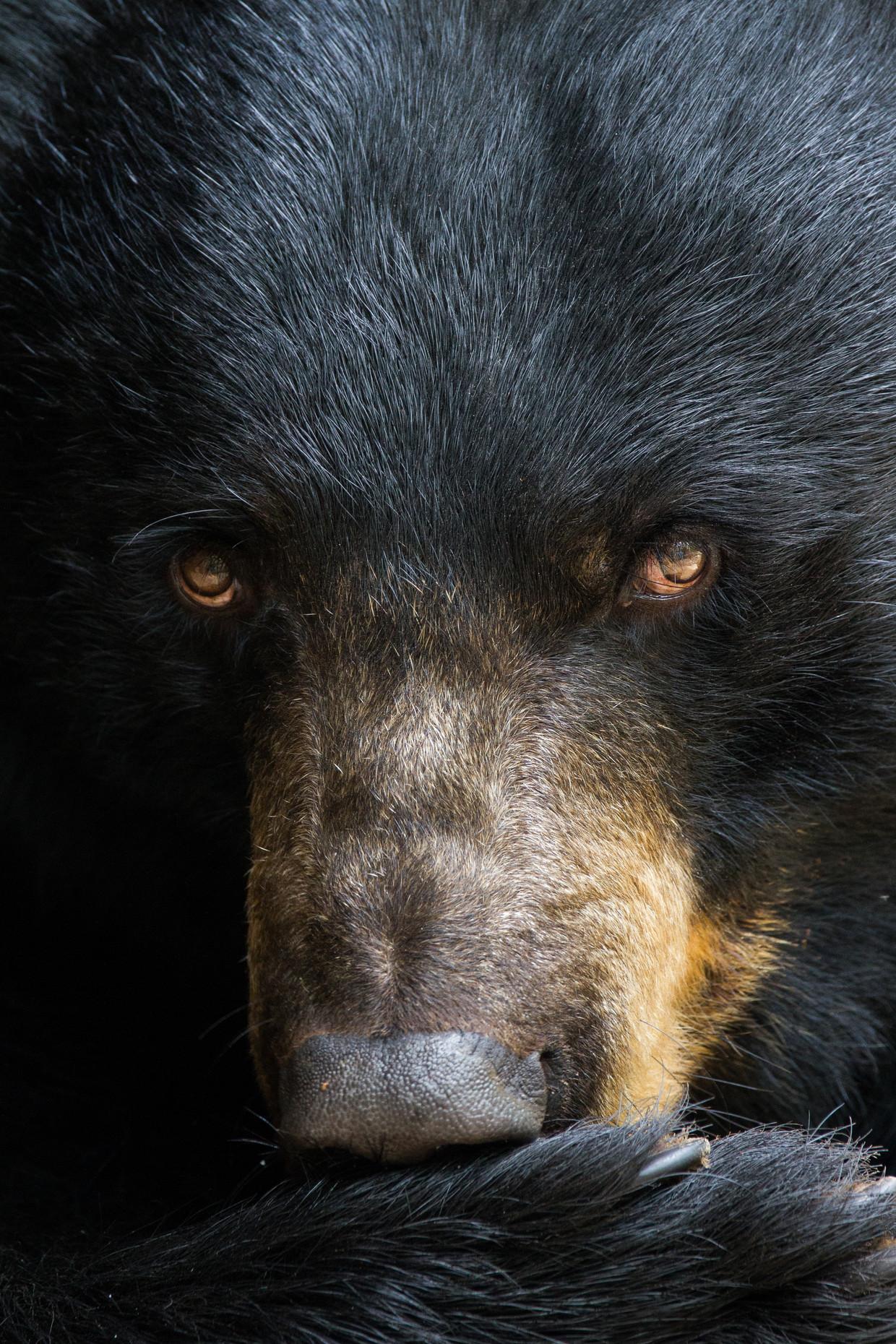 De inwoners van Tent City weigerden hun etensresten goed op te bergen, waardoor beren op het het kamp afkwamen.  Beeld Getty Images
