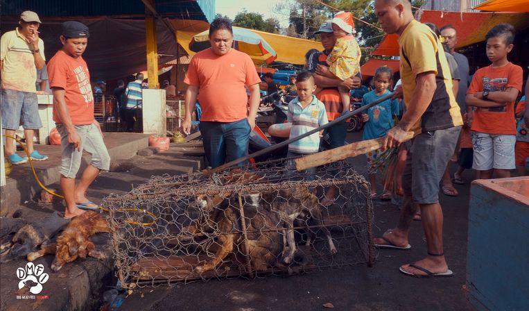 Honden bedoeld voor de vleesconsumptie worden in kooien verkocht op een traditionele markt op Sulawesi. Beeld AP