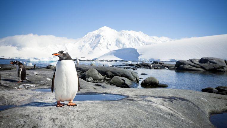 25.000 vierkante kilometer ijs is losgekomen van het Antarctisch Schiereiland Beeld Thinkstock