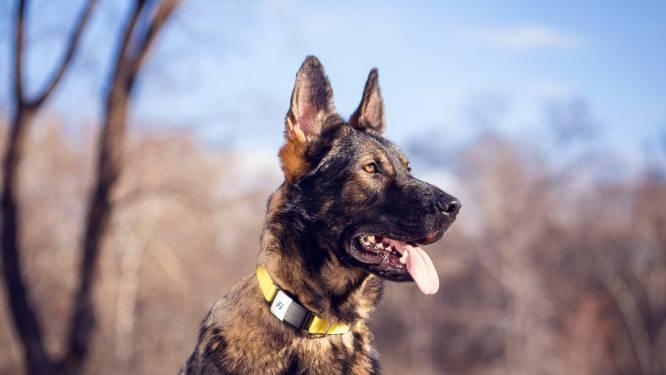 Fitbit voor je hond: er zijn steeds meer wearables voor dieren