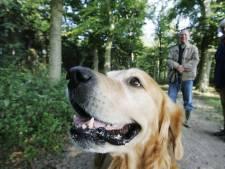 Tring! Betaalt u uw hondenbelasting wel? Dordt begint deze week met belastingcontroles baasjes aan huis