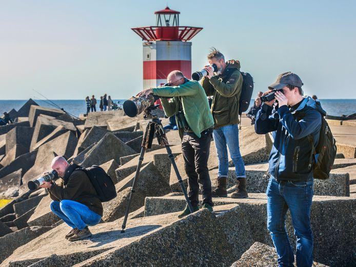 Vogelaars op Scheveningen waar een zeer zeldzame Rossmeeuw is neergestreken.