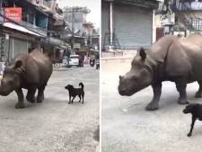 Neushoorn en hond wandelen samen door dorp in Nepal