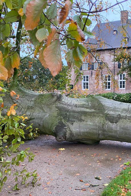 Enorme beuk omgewaaid voor kasteel Hernen: 'Donderdag speelden nog kinderen rondom de boom'