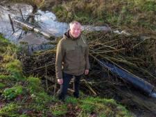 Waterschap Rivierenland probeert bevers te slim af te zijn met nieuwe vindingen, maar het lukt niet altijd