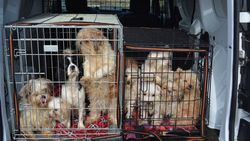 """Gepensioneerde agent krijgt drie maanden voor verwaarlozing 57 (!) honden: """"Gortige toestanden en compleet onverzorgd"""""""