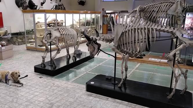 Un espace zoologie flambant neuf à l'Aquarium-Muséum de Liège