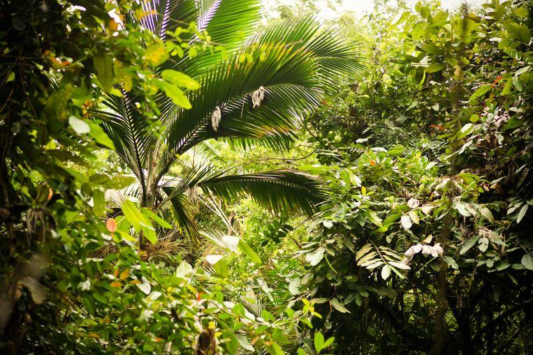 Een verhoogde CO2-concentratie in de lucht zorgt ervoor dat planten beter groeien. Wetenschappers onderzochten of dit ook leidt tot meer koolstofopslag in de bodem. Beeld Colourbox