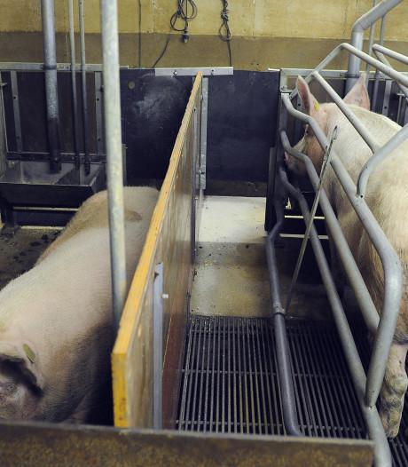 Brussel keurt opkopen stinkende varkensbedrijven goed