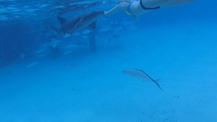 De vrouw werd tijdens het snorkelen voor de kust van de Britse Maagdeneilanden gebeten door een haai.