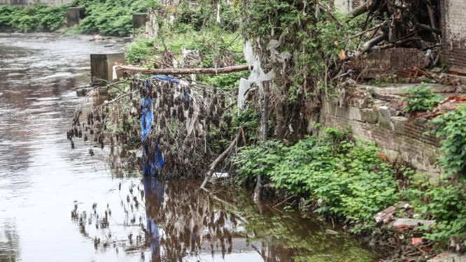 Intempéries: les plantations intensives d'épicéas en Wallonie ont aggravé les inondations, selon le WWF