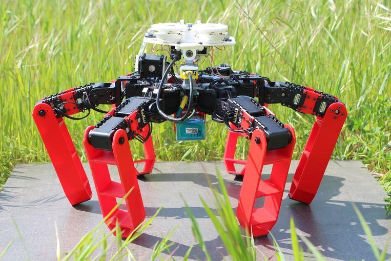 AntBot is de eerste wandelende robot die navigeert zonder gps, aldus de wetenschappers. Beeld Julien Dupeyroux - Aix Marseille Université / CNRS