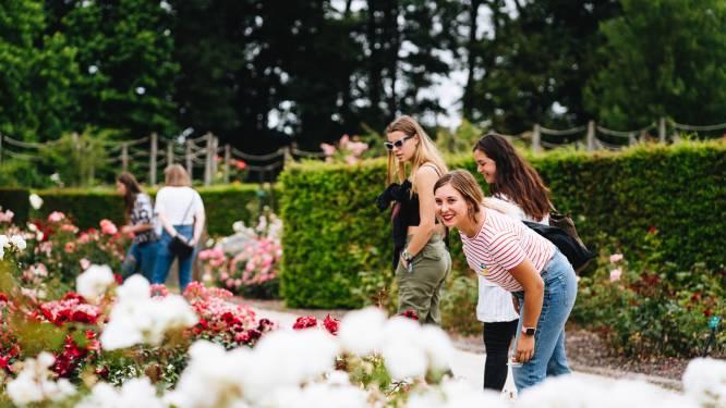 Het tweede Rozenfestival vindt plaats met openlucht fototentoonstelling en gezellige picknick