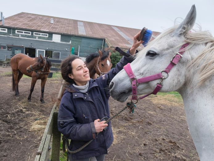 Ingrid Geerst met haar paarden