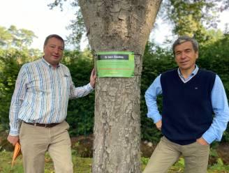 110 bomen 'roepen om hulp': inwoners Mostheuvellaan gebruiken spandoeken om paardenkastanjes van de kap te redden