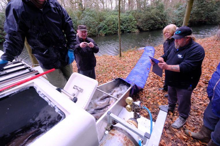 Een ton brasem en 20 graskarpers werden gisteren uitgezet in de visvijver.