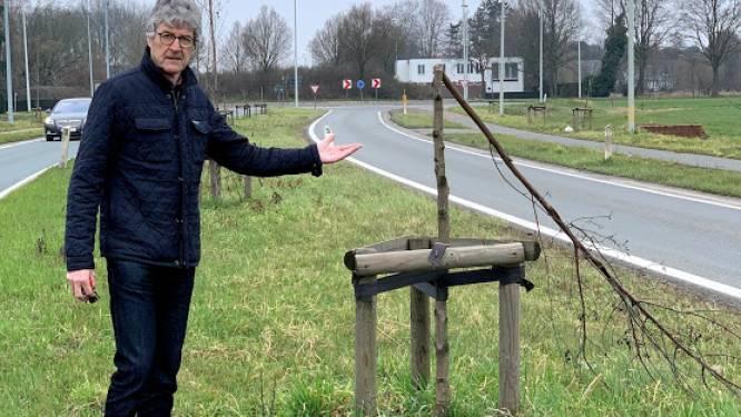 """Van Driessche (N-VA – Zele Vlakaf): """"Bomen N47 kregen onvoldoende water door aannemer"""""""