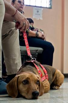 Un chien assiste en tant que victime au procès de son bourreau