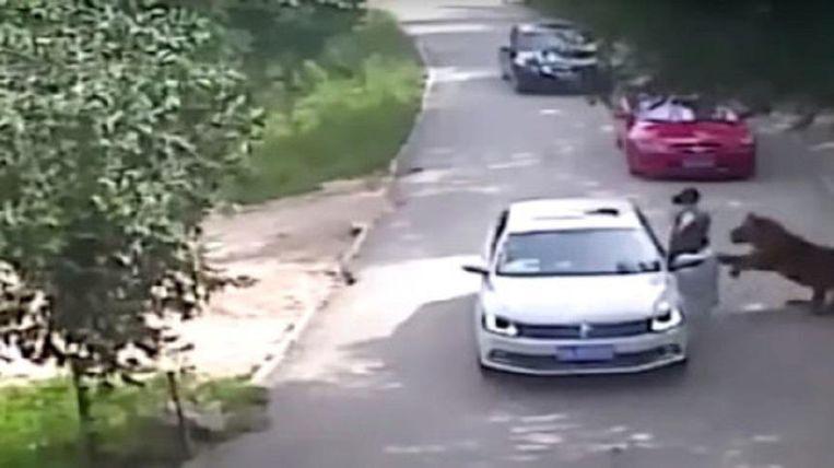 Een vrouw wordt gegrepen en meegesleurd door een tijger. Beeld Screenshot