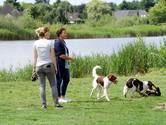 Frustratie onder Tilburgse baasjes om 'hondenverbod': 'Wat is het nu?'
