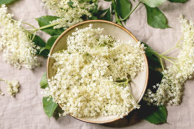 Close up of Elderberry flowers for making sweet homemade elderberry syrup on linen tablecloth. Flat lay Beeld Getty Images