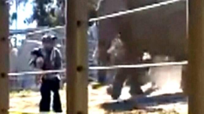 Dierentuinbezoeker klautert met dochter (2) in verblijf van olifanten, maar moet dan rennen voor zijn leven