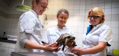 Van alles op de Velpse behandeltafel: van gekko met staartrot tot slang met huidziekte