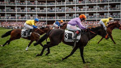 Waregem Koerse in cijfers: 40.000 bezoekers, 6.500 vips, 130 paarden