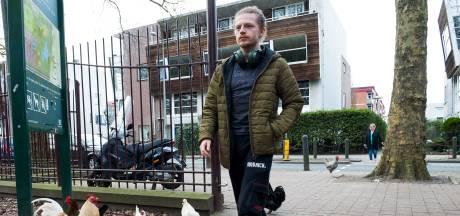 Oplossing voor overlast van kukelende hanen in Utrechtse woonwijk is nog niet gevonden