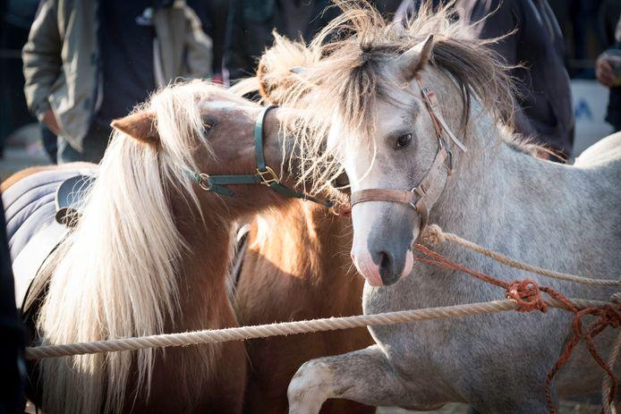 Paardenmarkt in Elst