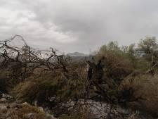 L'Italie mobilisée pour sauver un olivier millénaire dévoré par les flammes