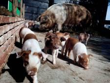 Lief! Zo gaat het nu met de pasgeboren dieren op de gesloten kinderboerderij