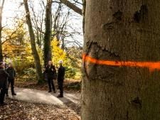 Actiegroep roept op tot bomenwake in strijd tegen groot onderhoud in Park Klarenbeek