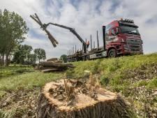 Gemeente Westland wil flink vergroenen: 12 miljoen euro voor meer bomen en planten in de dorpen