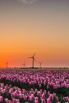 Flevoland raakt haar kleur weer kwijt