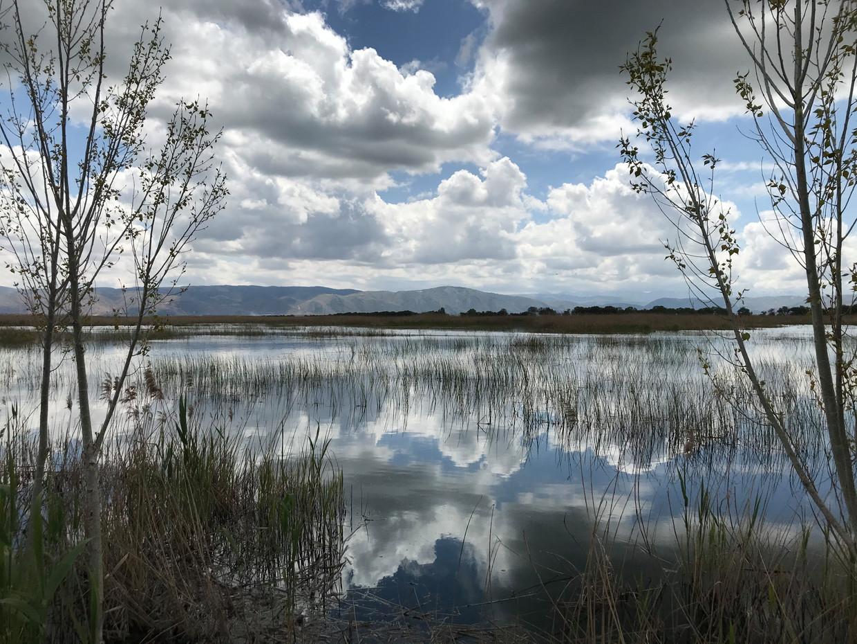 In het moeras van Ammiq in Libanon is de zwarte ibis na negen jaar weer teruggekeerd. Beeld Ana van Es
