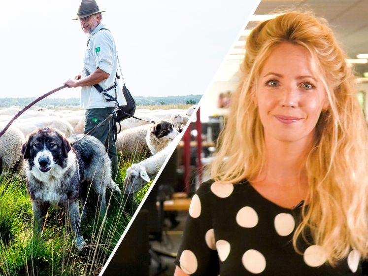 De Stentor Nieuws Update | Honden de baas op de Veluwe en stoorzender in Deventer