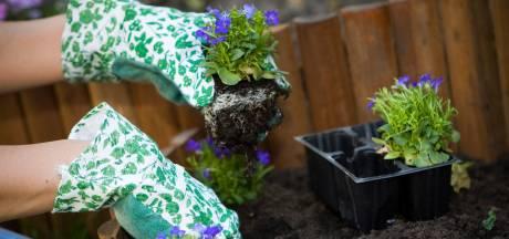 'Tweedehandsjes' moeten Hoeksche Waardse achtertuinen groener maken