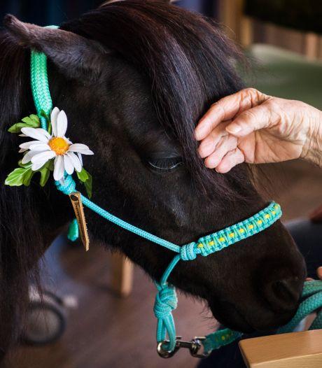 Man met ontbloot bovenlichaam valt paarden lastig in Midden-Limburg