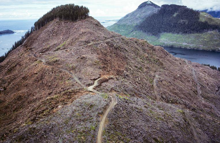 Ontbossing laat pijnlijke kale plekken na in Canada.